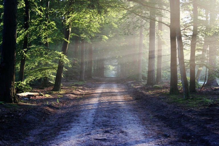 Surviving Bipolar: Taking the First Steps Towards Recovery (Patient Tale) – Part 6