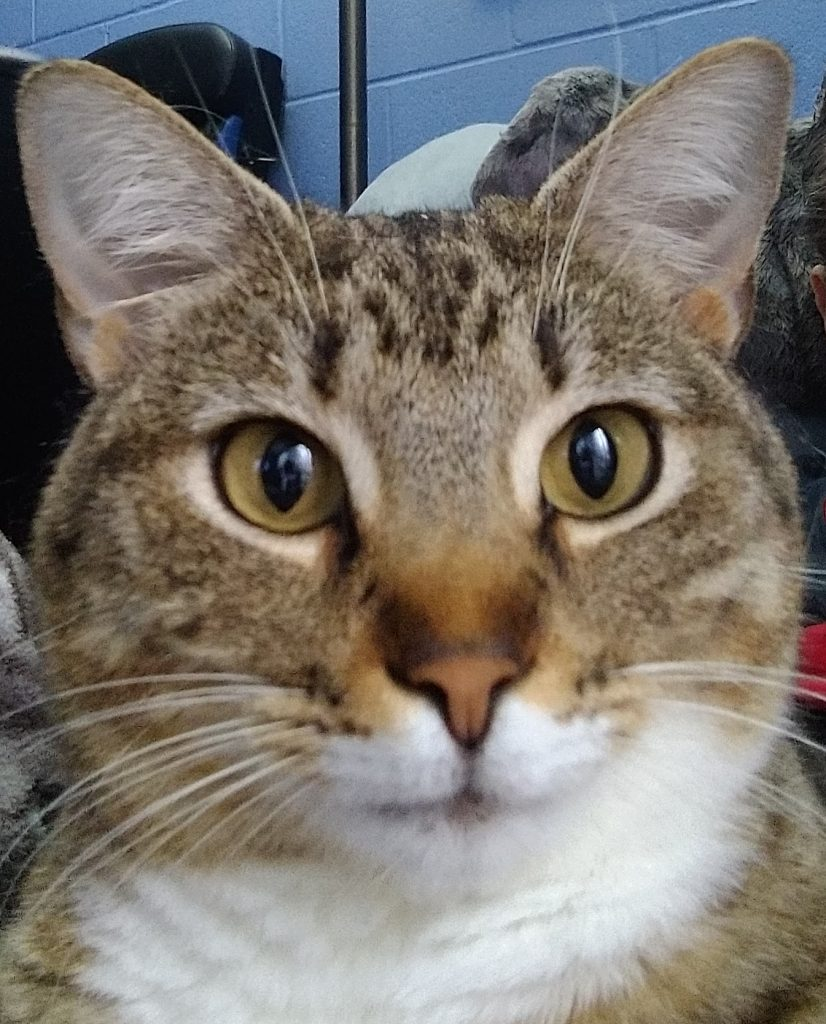 Close up picture of cat face