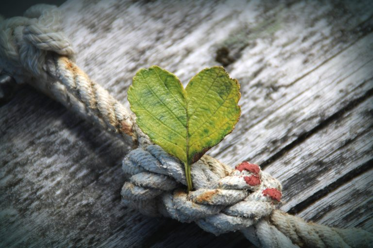 Spotlight on Gratitude: 15 Inspiring Quotes Will Make You Stronger (Part 1)